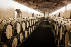 Bodega Concha y Toro (hapePHOTOGRAPHIX) Tags: chile southamerica mono wine barrel bodega vino wein barril conchaytoro fass pirque amricadelsur sdamerika hapephotographix 156chi fujix100t