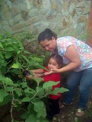 IMG-20160505-05725 (dernst) Tags: jardin huevos cosecha gallinas preescolar