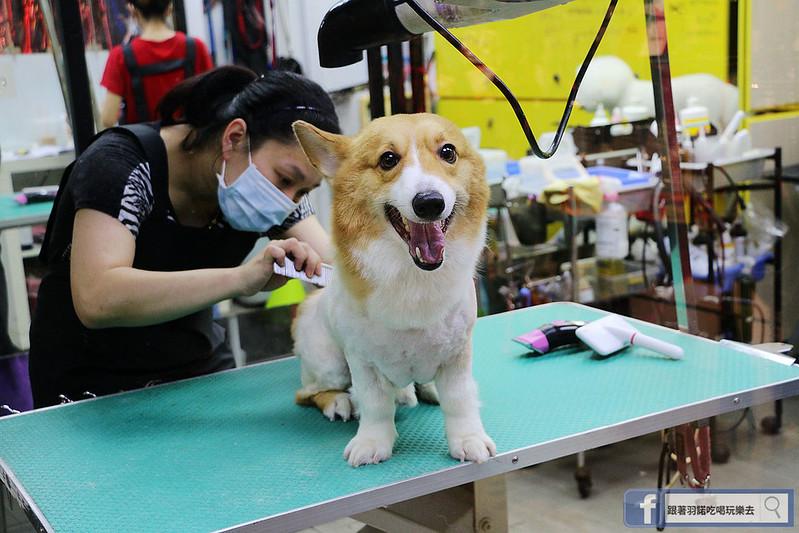 Hello! Dream Park 東區寵物美容沙龍060