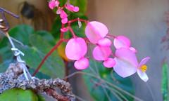 20150807_130135 - Cpia (Megaolhar) Tags: flores toy flickr do dia vale paulo apa bom inverno so campos facebook tuka jordo paraba fazendinha 2016 youtube ibama twitter jardinagem bioma gomeral