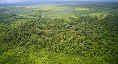 Forest Patches Riau Sumatra  DSC_5179 (JKIESECKER) Tags: green sumatra indonesia tropicalrainforest tropicalforest riausumatra tropicalbiodiversity