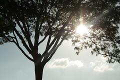 Sol (jeanmarccos) Tags: world cameraphone trees light shadow brazil sky sun detail tree planta sol nature rain brasil clouds canon reflections wonderful landscape photo flickr power sundown natureza cotidiano pic paisagem cu campo nuvem powerful rvore canonphoto platinumheartaward