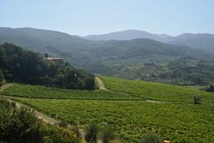 DSC_3878 (erinakirsch) Tags: italy castle landscape florence vineyard view wine vine winery vineyards views tuscany toscana grape grapevine florenceitaly frescobaldi winegrapes nipozzano