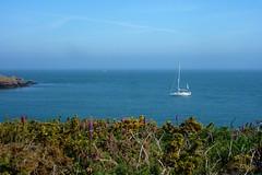 Houat (ZdArock) Tags: ocean france rock sailboat island boat brittany digitale bretagne atlantic digitalis bateau morbihan broom rocher voilier le atlantique ocan gent houat zdarock
