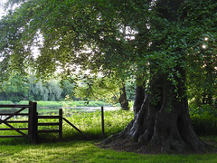 Time is precious (Lancashire Lass ...... :) :) :)) Tags: tree green grass fence gate may riverribble