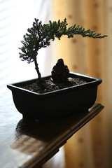 Bonsai Budda (taylor.robert81) Tags: bonsai tree budda background lit silouetto