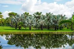 Reflection (JPShen) Tags: sunlight reflection tree water palm