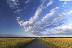 STRASSE INS NIRGENDWO (PADDYSCHMITT.DE) Tags: strasse weizenfeld roggenfeld schnewolken landstraseimallgu