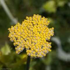 IMG_0677-232 (Martin1104) Tags: fotografie natuur bergen landschap vlinders yagodina snp bulgarije natuurfotografie natuurreis