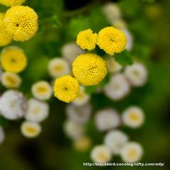 Flower #02 (osanpo) Tags: flower pen olympus ep5