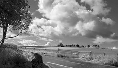 Left turn! (Elisafox22 Internet On/Off at the moment) Tags: elisafox22 sony rx100 fencefriday fence tree leaves stones stonewall crossroads road wooden fenceposts sky clouds fencedfriday outdoors shadows bw mono blackandwhite greyscale landscape aberdeenshire scotland monotone elisaliddell2016