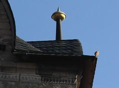 (:Linda:) Tags: bird church germany town triangle bluesky thuringia spire kestrel finial themar turmfalke gedrehtestau