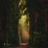 La Cathédrale Naturelle II (larsvandegoor.com) Tags: trees light mist forest path magical