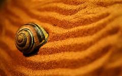 Mi pequeo  desierto.. (miigadepan) Tags: spain colores arena valladolid naranja caracol lineas castillayleon