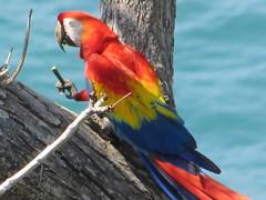 hula hoop sat 075 (Learn, Love, Conserve) Tags: hulahoop saprissa puntaleona feriaverdearanjuez