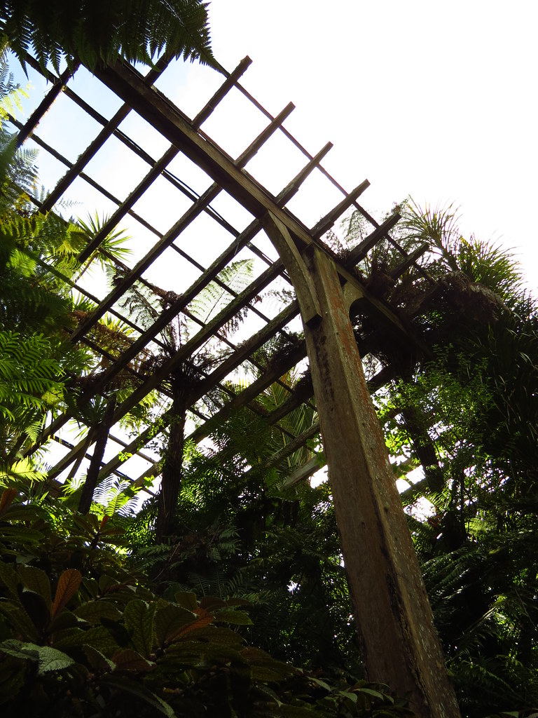 the world u0027s best photos of auckland and fernery flickr hive mind