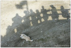 Im Schatten behütet (Jolanda Donné) Tags: schweiz licht april schatten hunde frauenfeld thurgau lichtundschatten april2009 sonydslra700 20090419