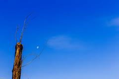 Simplicity 2 (Matias Negrete Pincetic) Tags: moon tree symmetry simplicity antennas