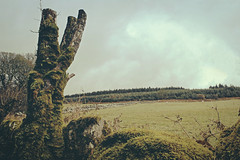 (jonathon lynam) Tags: wood old trees ireland winter sky dublin mountains cold nature leaves animals rock stone wall fauna grey flora sheep oxygen filter fungus land