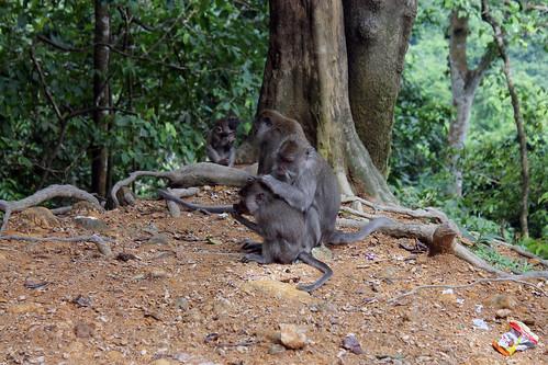 20150224_110423 Pusuk Monkey Forest, Lombok