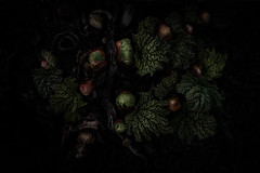 Undergrowth (Alison De Mars) Tags: green leaves garden dark leaf spring darkness grow bud rhubarb