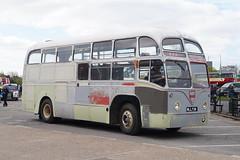 Ex-BEA AEC Regal IV MLL738 at Brooklands (Mark Bowerbank) Tags: iv regal brooklands aec exbea mll738