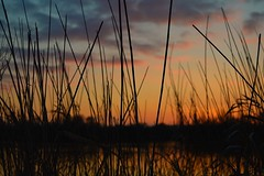 DSC_0303 (Joseph.Monk.Photography) Tags: sunset sun lake nature grass landscape nikon colours ricky rickmansworth nikond3200 aquadrome stockers