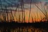 DSC_0303 (Joseph.Monk.Photography) Tags: sunset sun lake nature grass landscape nikon colours ricky rickmansworth nikond3200 aquadrome stockers
