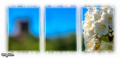 Blossom Triptych (PhilHydePhotos) Tags: plants flowersplants bloosom