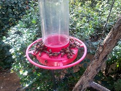Bee feeder (mattag2002) Tags: