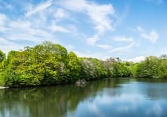 Spring is coming (wpc302) Tags: cloud lake tree oslo norway nikon d3300