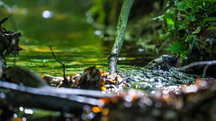 Magic creek... (.: mike | MKvip Beauty :.) Tags: orange green nature water berg leaves yellow closeup creek reflections germany prime spring europe soft bokeh availablelight sony magic ngc naturallight zen handheld dreamy manual alpha mystic mth 135mm rivulet shallowdof primelens manuallens manualexposure samyang extremebokeh smoothbokeh sonyalpha 2 bokehlicious manualfocusing beyondbokeh emount mkvip manualondigital 135mm2 sonyalpha6000 ilce6000 sonyilce6000 samyang135mmf20edumc sony6000 6000 samyang135mm2edumc