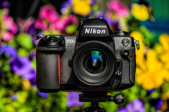 Nikon F100 (Martin Smith - Having the Time of my Life) Tags: camera dof bokeh depthoffield nikonf100 35mmfilm filmcamera cameraporn martinsmith bokehlicious martinsmith