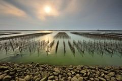 Sunset at oyster field  (Vincent_Ting) Tags: sunset sea sky reflection water clouds taiwan     truss fishingport   chaiyi  gorgeoussky   oysterfield   vincentting