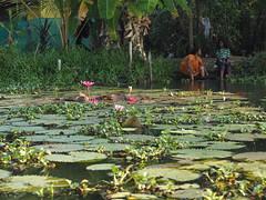 Indien - Backwaters bei Kumarakom (ulfinger) Tags: boot wasser kerala landschaft indien kumarakom kanle