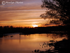 Tranquil Sunset-Chesapeake VA (moelynphotos) Tags: trees reflections river landscape virginia illuminated shore romantic backlit silhouetted chesapeake settingsun riverbanks tranquilscene colorfulsunset beautyinnature moelynphotos