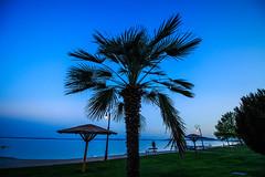 0019 (mikikkkeee) Tags: travel blue trees summer sky people lake plant man tree green beach nature canon landscape background like palm follow sunshade fave palmtree
