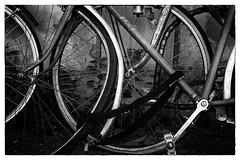 Ready to Ride 4 (jfusion61) Tags: street blackandwhite bw italy white black monochrome florence spring nikon bikes bicycles 2470mm d810