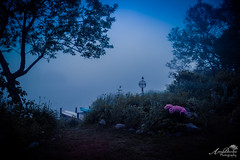Sunrise in the Fog (by Amy Davies, Plymouth, MA) Tags: blue friends water june fog sunrise ma outside pond soft cottage plymouth photographers ethereal doc kayaks beforesunrise pdp 2016