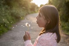 dandelion clock (anniewalker17) Tags: sunset sun girl breath peach naturallight blow dandelion