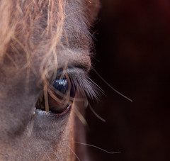 Eye to eye (Yvette Creighton) Tags: horse eye shire portrait bay clydesdale fresian hollowell