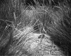 Pollution (Mark Dries) Tags: film wanderlust 4x5 90mm largeformat schneiderkreuznach 100iso orangefilter filmphotography fomapan 6890 angulon markguitarphoto markdries travelwide