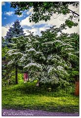 Trees in the park_DSC8810 photoshop NIK edit  (nkatesphotography) Tags: trees landscape outdoors barns scenic naturecenter peacevalleypark nikond600 nikon2470mmf28 fountainvillepa