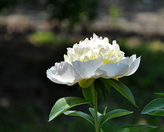 Cheval-Blanc (milka rabasa) Tags: colorsinourworld