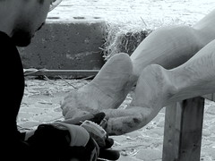 (Landanna) Tags: bw white black denmark woodwork zwart wit dnemark danmark atwork sort hvid denemarken zw snderborg snderjylland parbejde aanhetwerk zuidjutland woodsculpturefestival