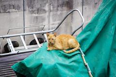 Today's Cat@2016-07-08 (masatsu) Tags: cat pentax catspotting mx1 thebiggestgroupwithonlycats