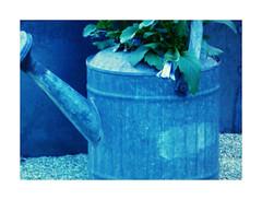 DSCF2950 (garneau.joel2 Thank you for 2,000 view) Tags: abigfave blue bleu colored colorido garden jardins 20faves 20favorites 20favs vintage
