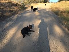 Pooped City Dog (rondodog) Tags: oakhurst 2016 july tay noob apache tass