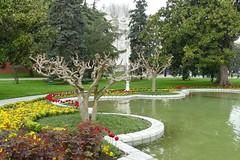 Garden (mollsie) Tags: tree turkey istanbul pruning pollard dolmabahepalace