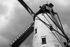 Old Windmill Damme (gerdvanmechelen) Tags: leica windmill 35mm belgium windmolen damme elmarit